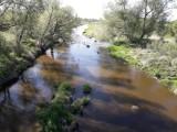 Poziom wody w wielu rzekach jest bardzo niski. Jak wygląda sytuacja na Prośnie?