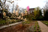 Wrocław. Ogród Botaniczny jest już otwarty (CENY BILETÓW, GODZINY)