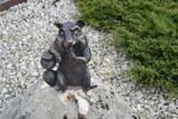 W Jaworznie odsłonięto kolejny pomniczek chomika europejskiego. Statuetka opiera się na klepsydrze. Chomika spotkamy na rynku