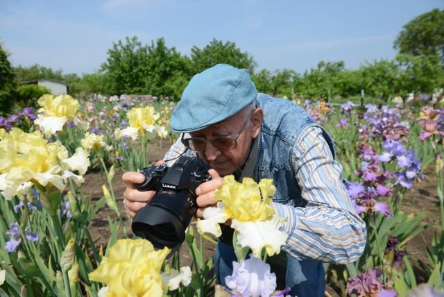 Pan Józef prowadzi dokumentację nowo powstałych irysów. Gdy zakwitną, fotografuje je i opisuje.