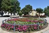 Tarnów mieni się barwami 50 tysięcy kwiatów. Upiększają skwery, parki, a także ronda w Tarnowie [ZDJĘCIA]