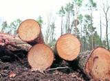 Leśnicy nie mają wolnego. Praca w oleśnickich lasach wre