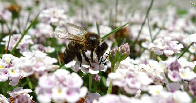 Akademia Przyjaciół Pszczół czeka na zgłoszenia placówek edukacyjnych