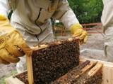 Pszczelarze mogą liczyć na pomoc. To już ostatni dzwonek, aby z niej skorzystać