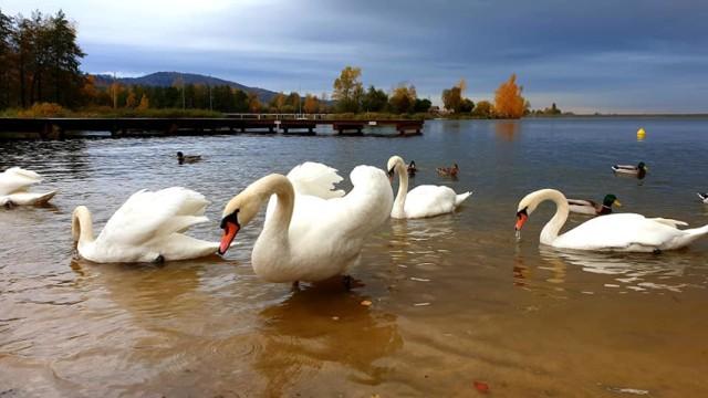 Jezioro Bielawskie cudowne we wrześniu i w październiku