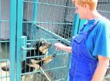 Psia Kraina to hotel dla zawierząt w Smolnicy. Lepiej oddać psa pod opiekę niż wyrzucić na ulicę