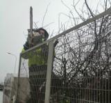 Wycinają drzewa na Podzamczu w Wałbrzychu? Sprawdzamy [ZDJĘCIA]