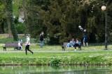 """Tereny zielone w centrum Poznania zostaną zabudowane? Jakie będą losy Sołacza? """"Miasto powinno odbyć tę dyskusję już 20 lat temu"""""""