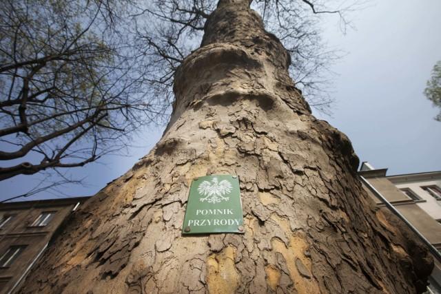 Czy wskazane przez wnioskodawcę drzewa doczekają się takich tabliczek?