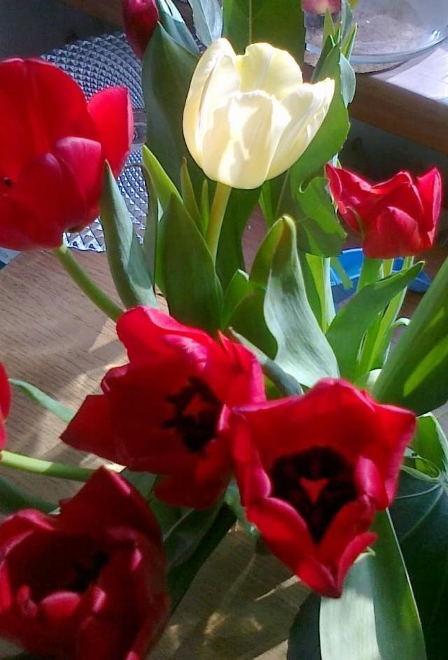 Kwiaty dla kobiet od GKS Tychy