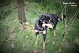 Przerażające! Pies przywiązany do drzewa w pow. mikołowskim, pozostawiony na pastwę losu. Kto to zrobił?