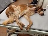 Opolskich animalsów uratowali… ludzie. TOZ znowu może pomagać skrzywdzonym zwierzętom!
