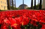 Tutaj we Wrocławiu rządzi wiosna. Zobaczcie zdjęcia!