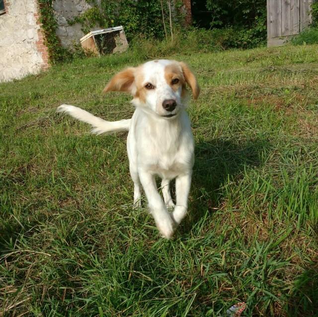Majdan Nowy: Nastolatka zaopiekowała się psami i wyręczyła gminę