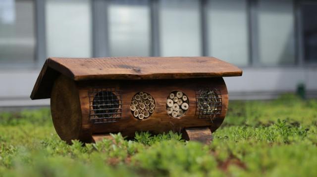 Wzorowany na projekcie starych barci do hodowli pszczół, zbudowany z drewna, łodyg forsycji i maliny, z brzozowymi palikami i wysuszonymi pędami traw oraz zabezpieczony przed dostępem drapieżników – to pierwszy na Wydziale Zarządzania Uniwersytetu Łódzkiego hotel dla owadów, na dodatek zbudowany przez samych pracowników. Pierwszy domek dla owadów stanął na zielonym dachu Wydziału, a jeżeli zostanie dobrze przyjęty przez przyszłych lokatorów, domków pojawi się więcej.