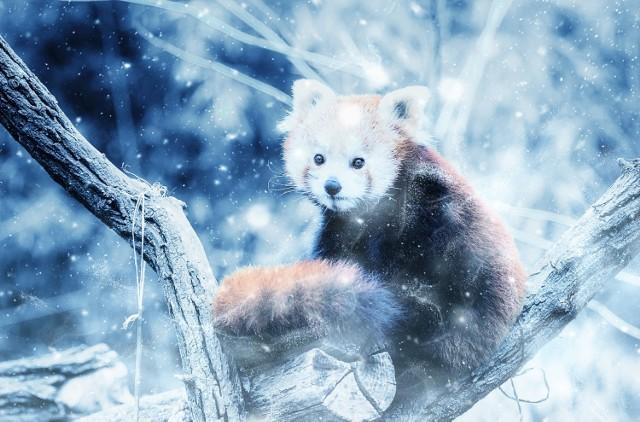 Rude pandy są urocze! Oto dowody [GALERIA]