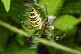Pająki w ogrodach naszych Czytelników. Dostaliśmy sporo zdjęć [ZDJĘCIA INTERNAUTÓW]