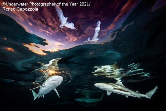 """Zwycięskie zdjęcie konkursu i zdobywca 1. nagrody w kategorii """"Szeroki kąt"""".  Mówi się, że dna oceanów są zbadane w mniejszym stopniu niż Księżyc, przy czym woda zajmuje aż 71 procent powierzchni naszej planety. Nic więc dziwnego, że podwodny świat hipnotyzuje, zaciekawia i onieśmiela zarazem. Choć wydaje się odległy, bez oceanów człowiek nie mógłby istnieć. Niektórzy czują się z nimi na tyle silnie związani, że eksplorują podwodne głębiny, nierzadko wykonując zaskakujące zdjęcia. Te najlepsze są co roku nagradzane w konkursie """"Underwater Photographer Of The Year"""". Zobacz najlepsze fotografie z edycji 2021."""