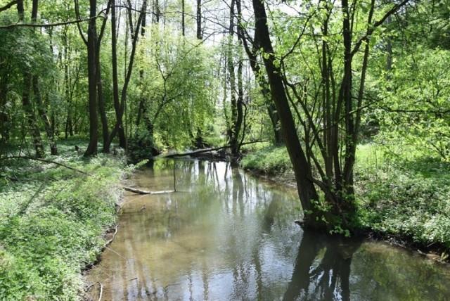 Nie będzie degradacji przyrody - udało się ocalić Dolinę Prądnika. Wody Polskie mają nowe plany przeciwpowodziowe