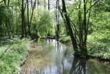 Dolina Prądnika ocalona - nie będzie degradacji przyrody. Wody Polskie mają nowe plany przeciwpowodziowe