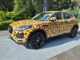 """Jaguar w zoo, czyli nietypowa akcja marketingowa. Jak można go """"upolować""""?"""