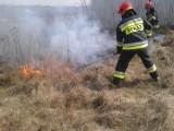 Pożar suchej trawy w okolicach miejscowości Gowarzów w gminie Gidle