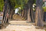 Aktywiści ekologiczni o możliwości uszkodzenia ponad 200 drzew. Wykonawca robót o przesadzonych oskarżeniach