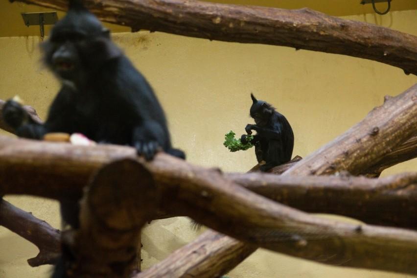 Krakowskie zoo wydłuża Dzień Dziecka