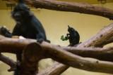 Dzień Dziecka w krakowskim zoo zaczyna się już w sobotę i potrwa pięć dni