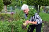 Zbąszyń. Warzywa i owoce z własnej działki. Swój ogród pokazała NaM, Aleksandra Nowak [Zdjęcia]