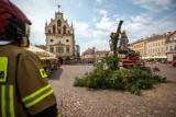 Będzie nowe drzewo na Rynku w Rzeszowie. Stanie w miejscu po złamanej w lipcu akacji. Miasto ma na to kilkadziesiąt tysięcy złotych
