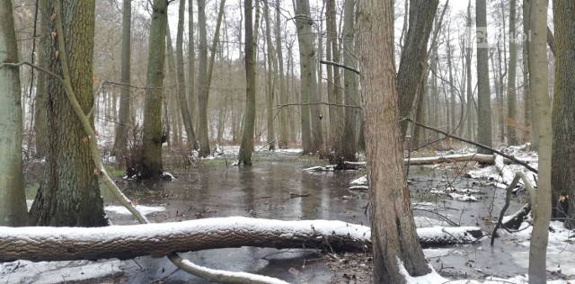 Szczecin, okolice jeziora Szmaragdowego, 7.02.2021