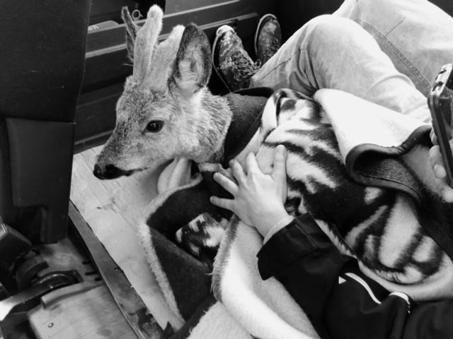 Fundacja Na Pomoc Zwierzętom  potrzebuje pomocy, by nadal pomagać takim zwierzakom, ja te ze zdjęć...
