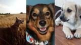 Dzień Kundelka 2019. Pomorskie kundelki na zdjęciach Czytelników. Psiaki ze schronisk, które znalazły kochające domy i wychowane od małego