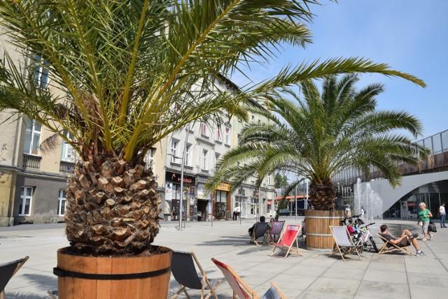 Palmy na nowym rynku w Chorzowie