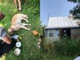 Pożar domu w Celejowie w pow. puławskim. Strażacy podali rannemu psu mu tlen. Zobacz