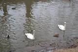 W Sosnowcu stanął pierwszy Ptasi Bufet. Automat do karmienia wodnego ptactwa znajdziemy na Stawikach