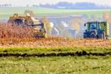 Rolnictwo. Pomoc na start dla grup producentów. Wnioski tylko do końca maja
