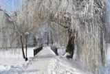 Powiało mrozem... jak na luty przystało. Park Miejski w Zamościu w mroźnej odsłonie wygląda baśniowo – wirtualny spacer po mieście [ZDJĘCIA]
