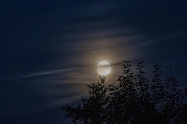 We wrześniu czeka sporo prac w ogrodzie. Zobacz, kiedy je wykonać zgodnie z fazami Księżyca.