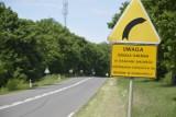 Trasa widmo! Tak dziś wygląda tzw. stara trójka. A kiedyś była to najważniejsza droga w Lubuskiem!