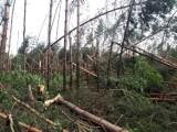 Lubelskie: Zakaz wstępu do lasów po ostatniej wichurze. Usuwanie szkód potrwa kilka miesięcy