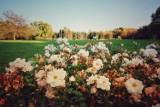 Park Śląski. Rosarium ZACHWYCA! Tak, jesienią też kwitną róże. Zobaczcie, ile odmian tu jest