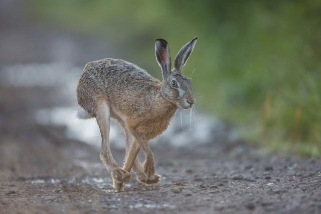 Piękne zdjęcia zwierząt i lokalnej przyrody autorstwa Grzegorza Sawko.