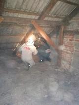 Gmina Gizałki. Kilkanaście aktywnych gniazd os na poddaszu budynku mieszkalnego. Interweniowali strażacy z OSP Wierzchy-Leszczyca