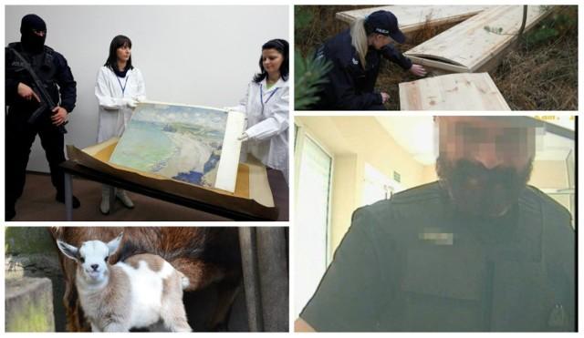 W ostatnich latach w Wielkopolsce doszło do wielu głośnych kradzieży. W 2000 r. z poznańskiego muzeum zniknął jedyny w Polsce obraz Claude'a Moneta. Z kolei 5 lat później w Swarzędzu fałszywy konwojent ukradł 8 mln zł. Ale były też przypadki kradzieży dość nietypowych, gdy łupem złodziei padały żywy koziołek z zoo, 15-kilogramowy kebaba czy... trumny ze zwłokami.   Zobacz w galerii najgłośniejsze i najdziwniejsze kradzieże, do jakich doszło w Wielkopolsce w ostatnich latach ---->