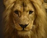 Nowy mieszkaniec zamojskiego zoo robi wrażenie. Mamy jego zdjęcia! Koniecznie zobaczcie