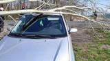 Powiat pyrzycki. Na samochód spadło drzewo. Okazało się, że winę za to ponoszą... bobry!