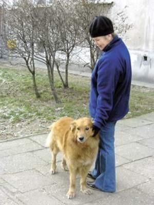 Mając tylko jednego psa nie będziemy w Chrzanowie płacić podatku   Fot. Lidia Góralewicz