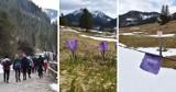 Krokusy 2021 w Dolinie Chochołowskiej. Sezon w Tatrach właśnie się zaczyna! Tłumy turystów na szlaku. Zdjęcia 2.05.2021